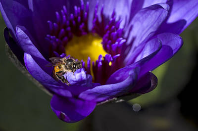 Photograph - Bee Hug by Priya Ghose