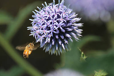 Bee In Flight Art Print by Janet Mcconnell
