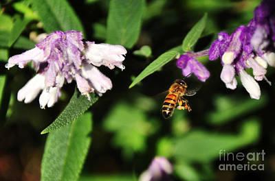 Bee In Flight Art Print by Kaye Menner