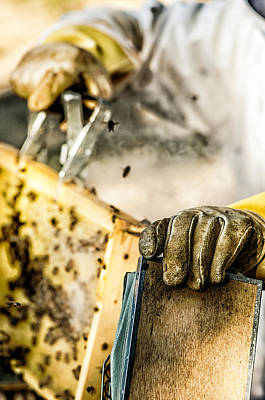 Wax Cap Photograph - Bee Keeper by James Bull