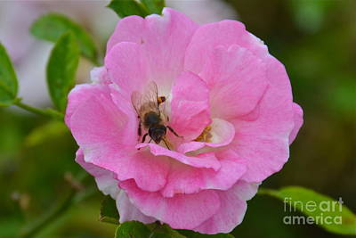 Photograph - Bee Mine by Carol  Bradley