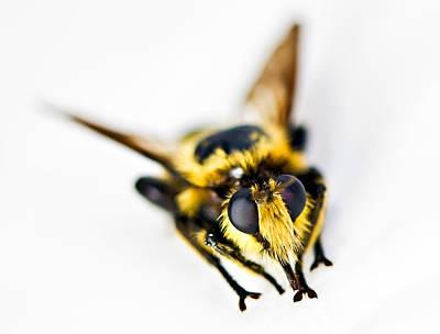 Bee Art Print by Susan Leggett
