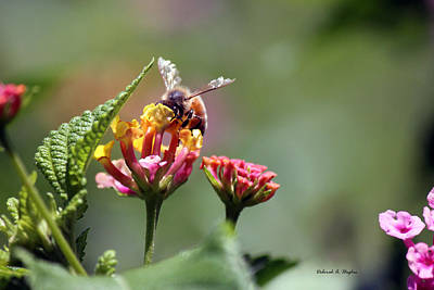Photograph - Bee Sweet by Deborah Hughes