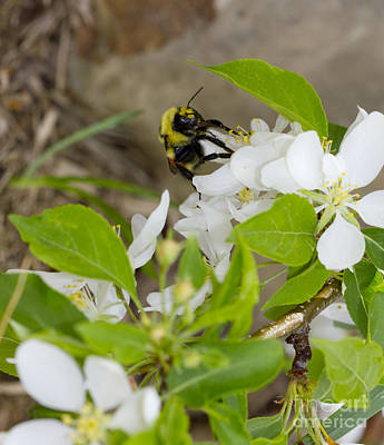 Photograph - Bee-utiful Blooms by Donna L Munro