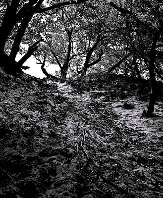 Photograph - Beech Forest by Michael Friedman
