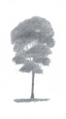 Beech Tree Drawing Number One Art Print by Alan Daysh