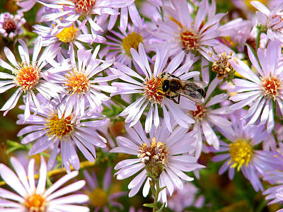 Beeflowers Art Print