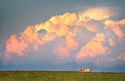 Art Print featuring the photograph Beefy Thunder by Brian Duram