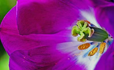 Tulips Photograph - Bees Heaven by Danielle Del Prado