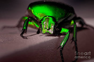 Photograph - Beetle  by Venura Herath