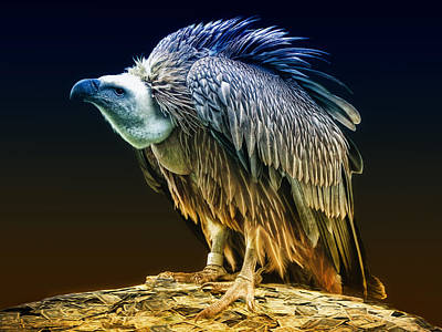Vulture Photograph - Beggars Banquet by Joachim G Pinkawa