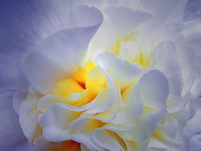 Begonias Photograph - Begonia Shadows by Lianne Schneider