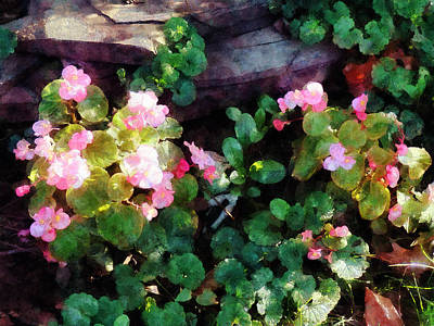 Photograph - Begonias By Stone Wall by Susan Savad