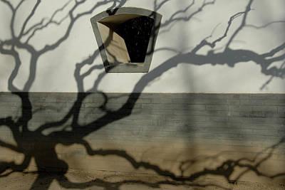 Bare Trees Photograph - Beijing, Ditan Park by Anton Hazewinkel