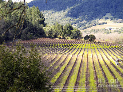Print featuring the photograph Bella Vineyards by Leslie Hunziker