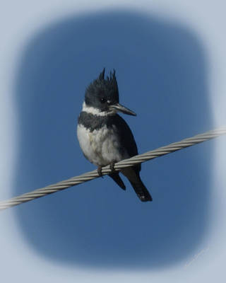 Belted Kingfisher Wall Art - Photograph - Belted Kingfisher 2 by Ernie Echols