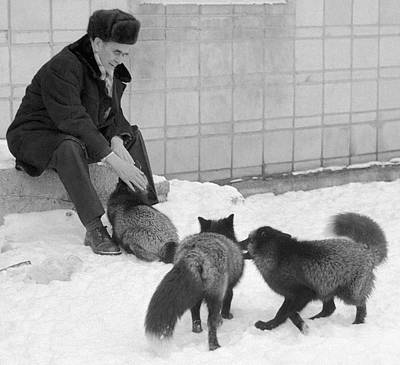 Selective Breeding Photograph - Belyaev With His Selectively Bred Foxes by Ria Novosti