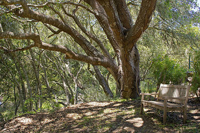 Photograph - Bench And Tree In Cambria II by Mick Anderson