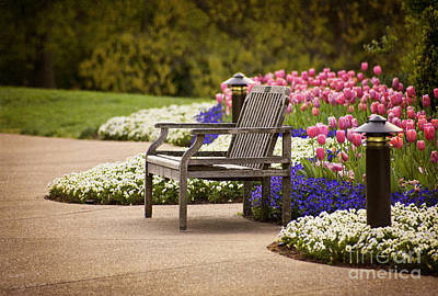 Photograph - Bench In The Park by Cheryl Davis