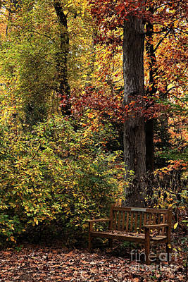 Bench In The Woods Art Print by John Rizzuto
