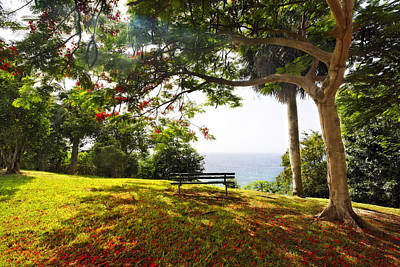 Flamboyan Photograph - Bench Under A Flamboyan Tree by George Oze