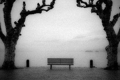 Bench Under Sycamore Trees Art Print