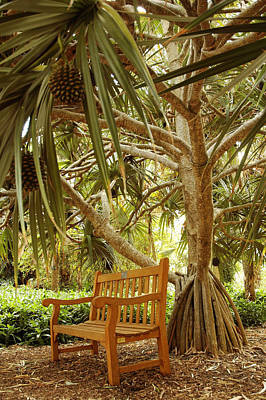 Photograph - bench under tree at Selby Gardens by Carol Vanselow