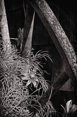 Beneath The Wheel Print by Susan Capuano
