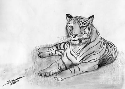 Shashi Kumar Drawing - Bengal Tiger by Shashi Kumar