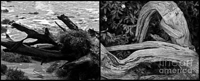 Photograph - Bentwood Diptychs by Ken Frischkorn