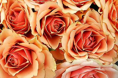 Bergen Roses Art Print
