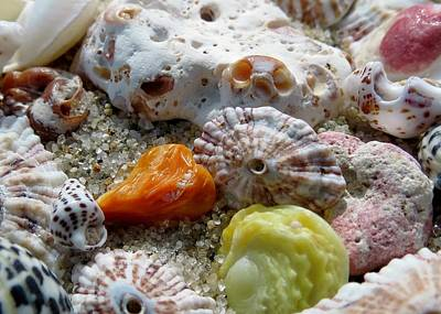 Bermuda Beach Shells Art Print by Janice Drew