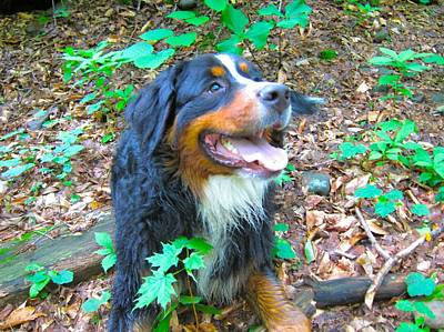 Bernese In The Woods Art Print