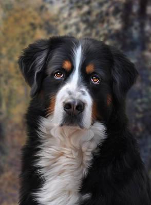 Canine Digital Art - Bernese Mountain Dog by Julie L Hoddinott