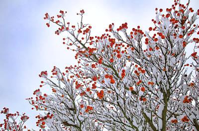 Lisa Williams Photograph - Berries by Lisa Williams