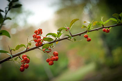 Photograph - Berry Season by Gene Hilton