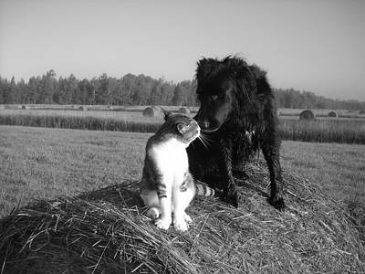 Best Buddies Black And White Art Print