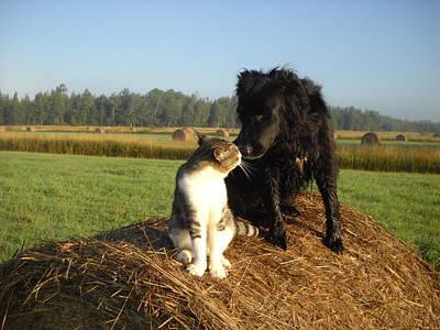 Photograph - Best Buddies In The Hay Field by Kent Lorentzen