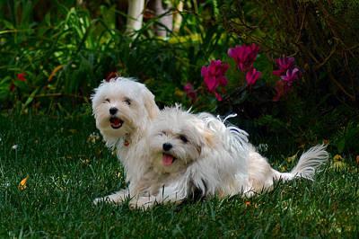 Photograph - Best Friends by Lynn Bauer