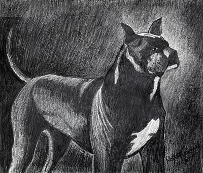 Rottweiler Dog Drawing - Best In Show by Bob Crawford