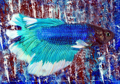Betta In Blue And Red Art Print by Neal Wiseman