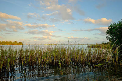 Photograph - Beyond The Marsh Grass by Laura DAddona