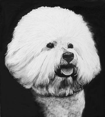Dog Portrait Drawing - Bichon Frise by Rachel Hames