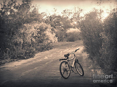 Bicycle In Tucson Art Print