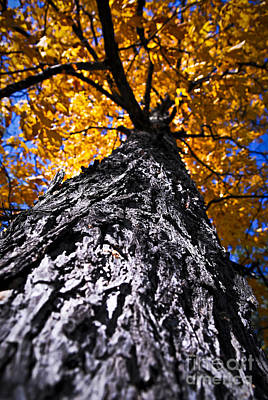 Big Autumn Tree In Fall Park Art Print by Elena Elisseeva