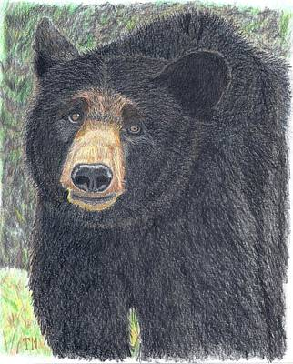 Ursus Drawing - Big Bear by Tony  Nelson