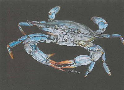 Blue Crab Drawing - Big Blue by Erin  Glover