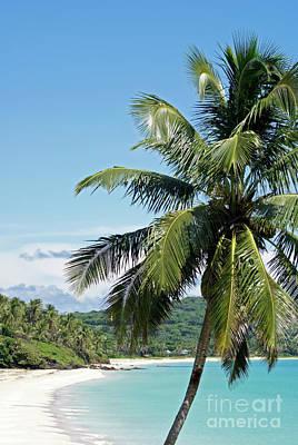 Photograph - Big Corn Island Palm Tree Nicaragua by John  Mitchell