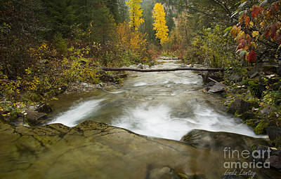 Photograph - Big Creek by Idaho Scenic Images Linda Lantzy
