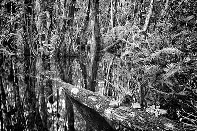 Big Cypress Gallery Art Print